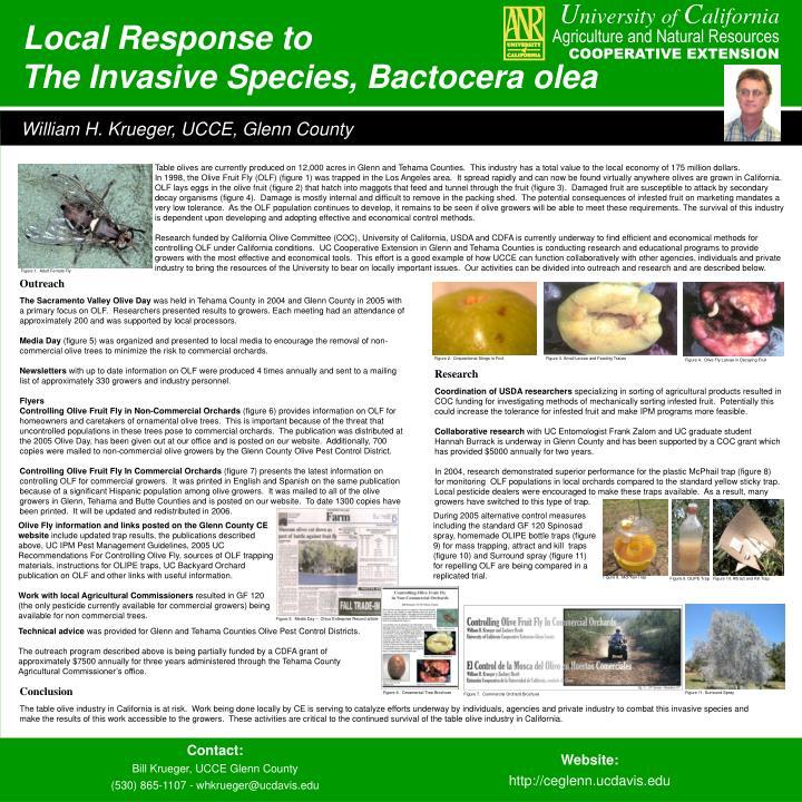 The invasive species bactocera olea