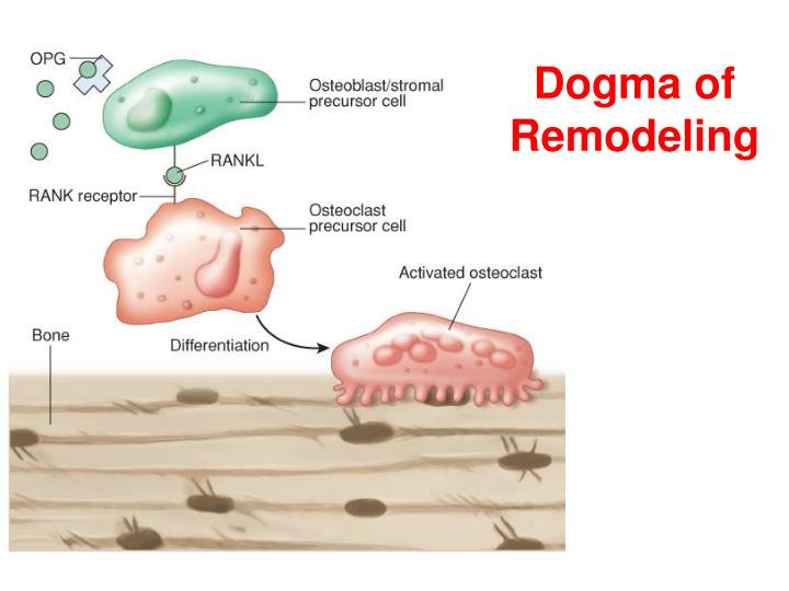 Dogma of Remodeling
