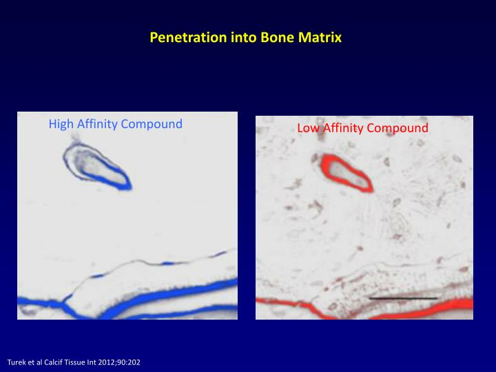 Penetration into Bone Matrix