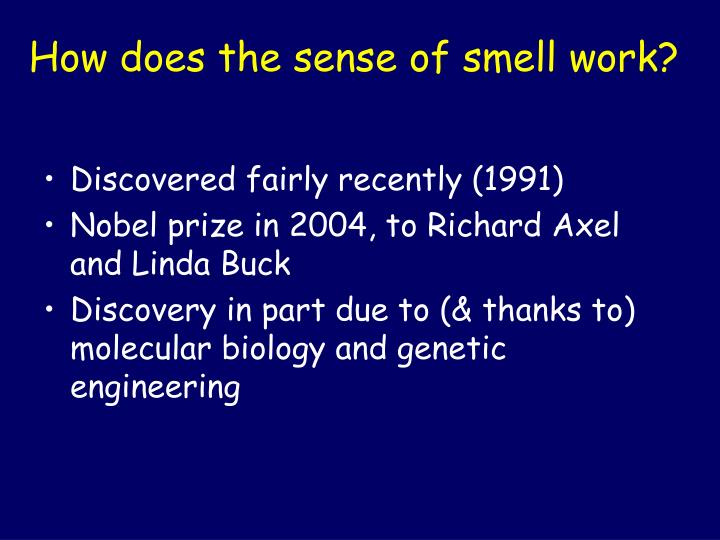 How does the sense of smell work?