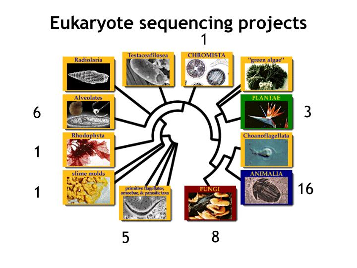 Eukaryote sequencing projects