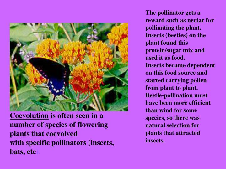 The pollinator gets a reward such as nectar for pollinating the plant. Insects (beetles) on the plant found this protein/sugar mix and used it as food.