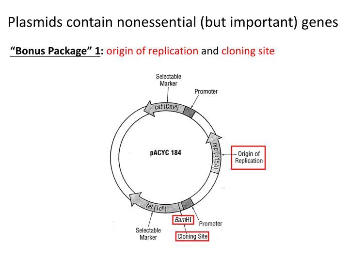 Plasmids contain nonessential (but important) genes
