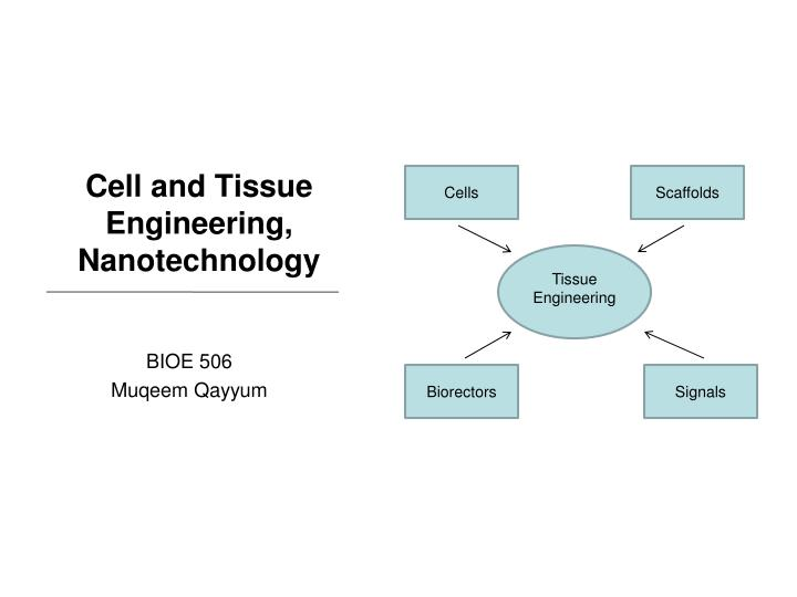 Ppt Cell And Tissue Engineering Nanotechnology Powerpoint Presentation Id 3349339