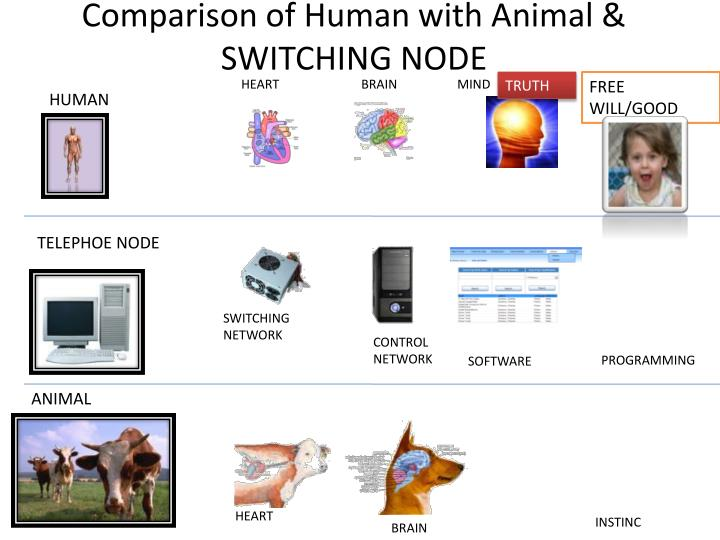 Comparison of Human with Animal & SWITCHING NODE