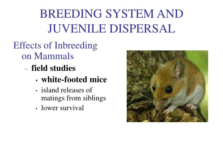 BREEDING SYSTEM AND JUVENILE DISPERSAL