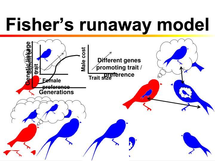 Fisher's runaway model