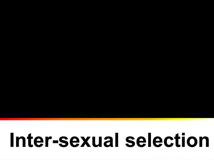 Inter-sexual selection