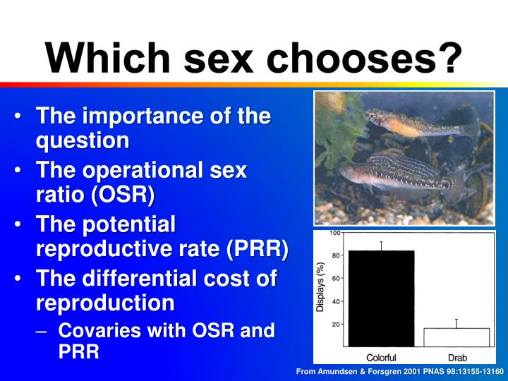 Which sex chooses?