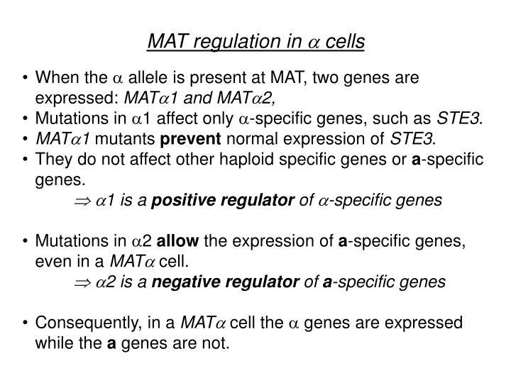 MAT regulation in