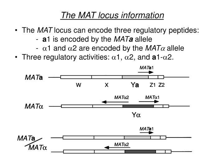 The MAT locus information