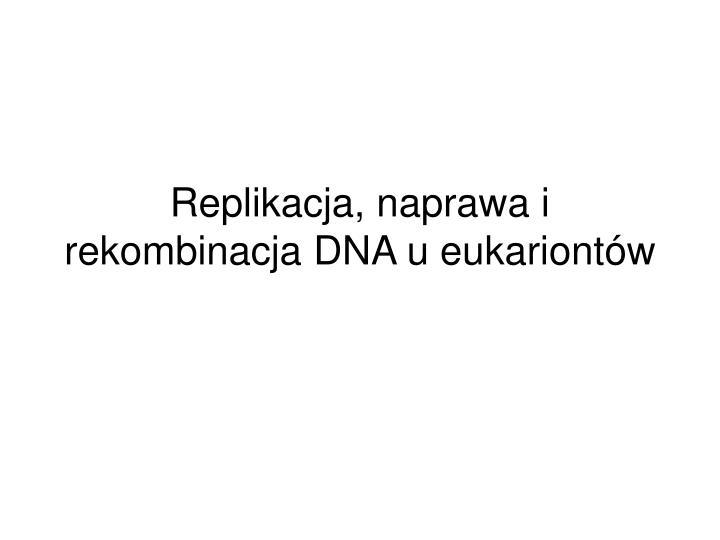 replikacja naprawa i rekombinacja dna u eukariont w n.
