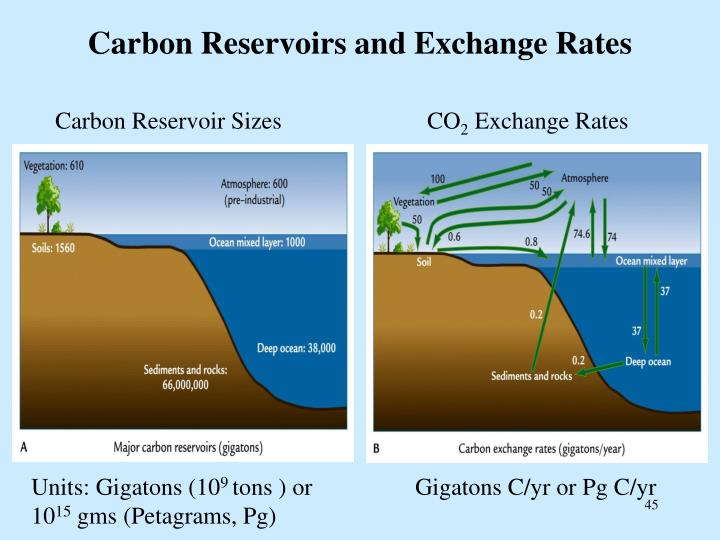 Carbon Reservoirs and Exchange Rates