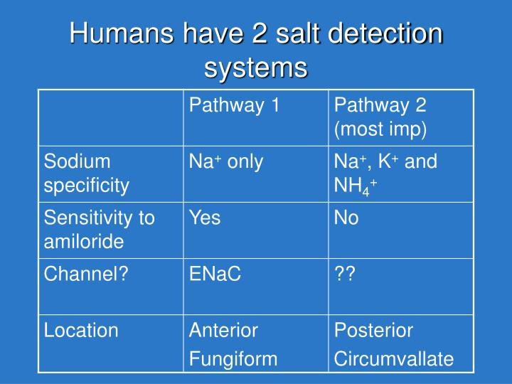 Humans have 2 salt detection systems
