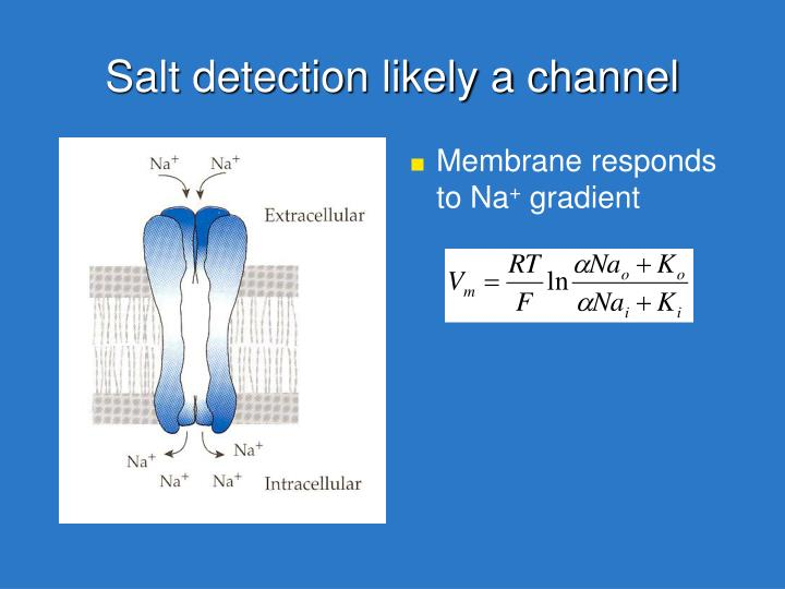 Salt detection likely a channel