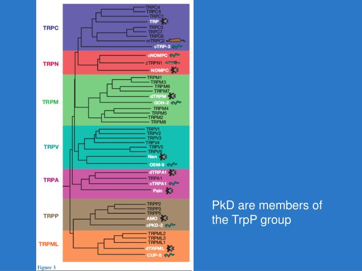 PkD are members of the TrpP group