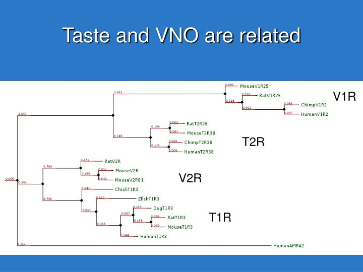 Taste and VNO are related