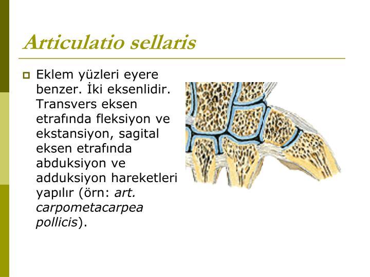 Articulatio sellaris