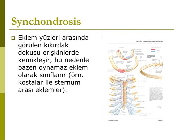Synchondrosis