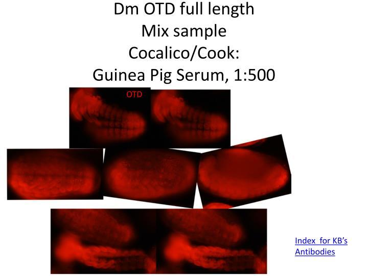 Dm OTD full length