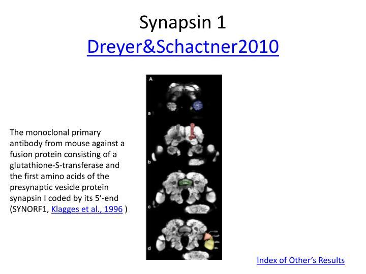 Synapsin