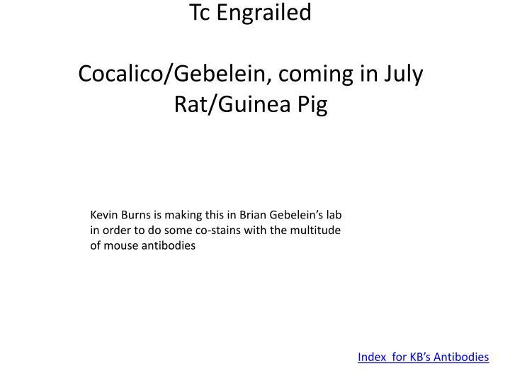 Tc Engrailed