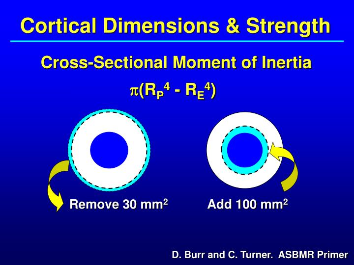 Cortical Dimensions & Strength