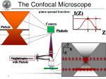 the widefield microscope