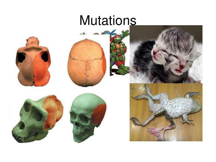 mutations n.