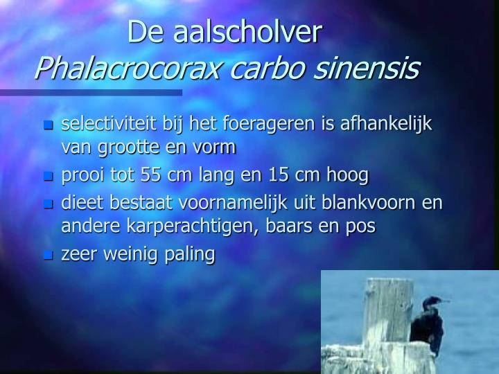 De aalscholver phalacrocorax carbo sinensis1