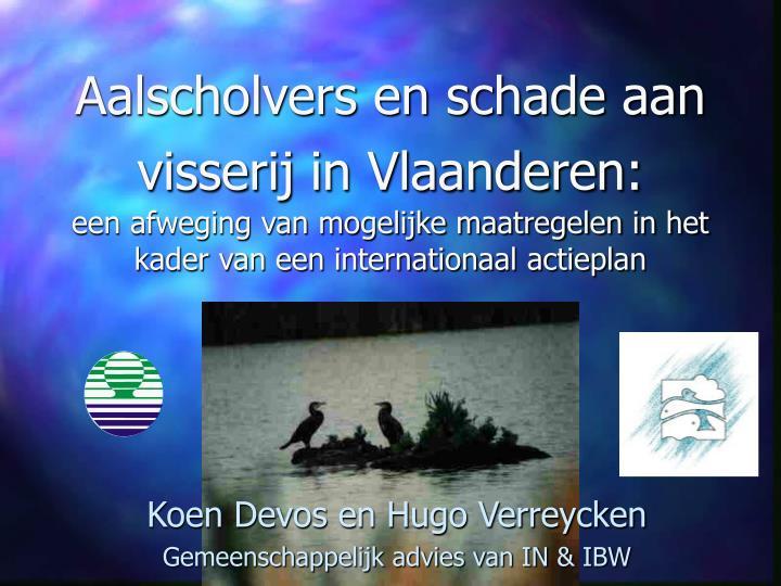 Aalscholvers en schade aan visserij in Vlaanderen: