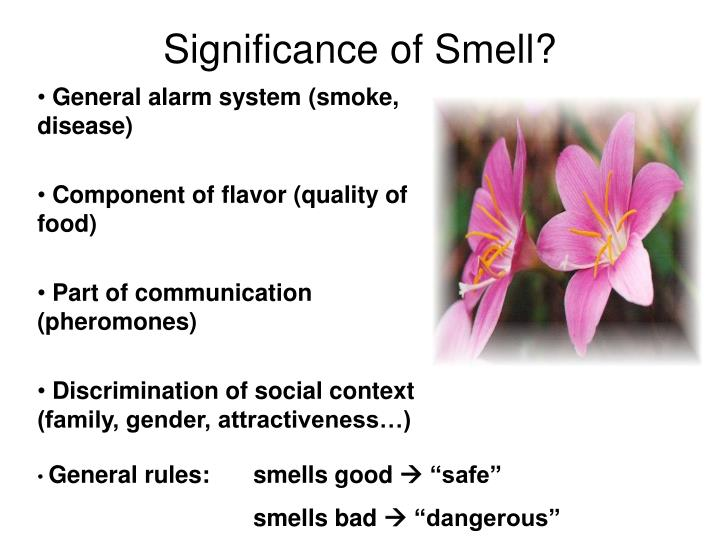 Significance of Smell?
