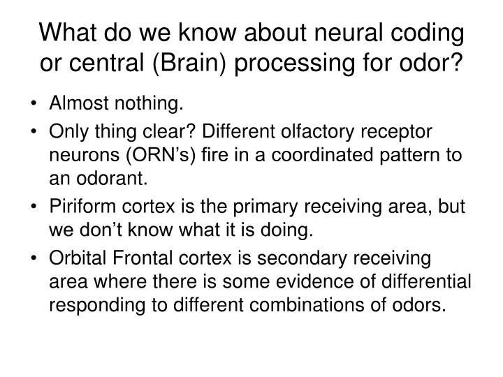 What do we know about neural coding or central (Brain) processing for odor?