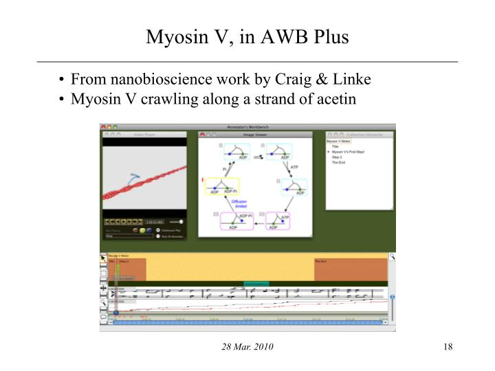 Myosin V, in AWB Plus
