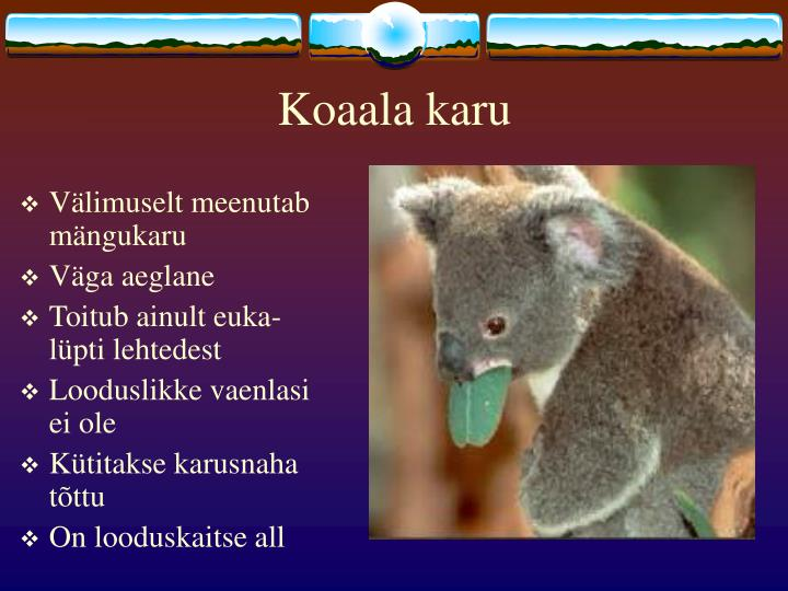Koaala karu
