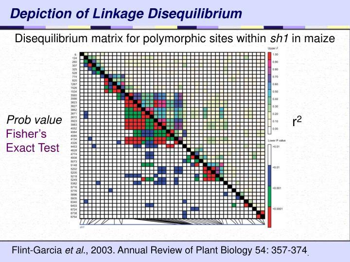 Depiction of Linkage Disequilibrium