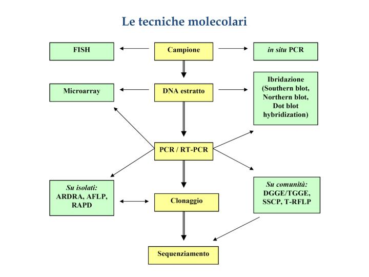 Le tecniche molecolari
