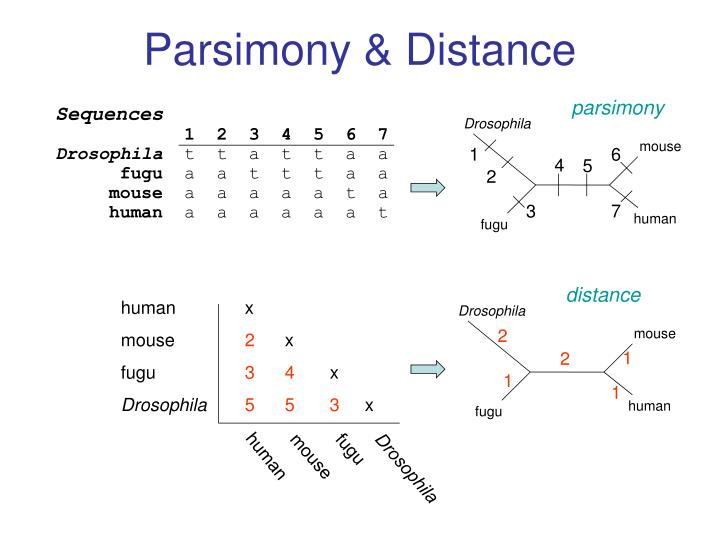 Parsimony & Distance
