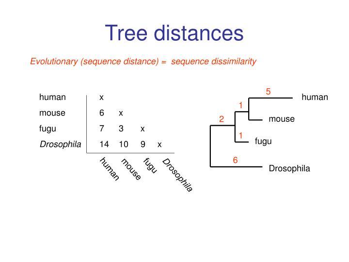 Tree distances