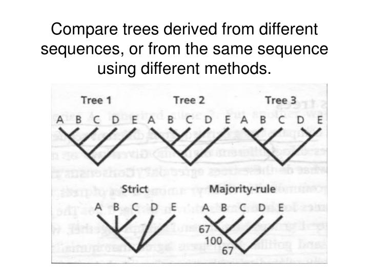 Compare trees derived from different sequences, or from the same sequence using different methods.