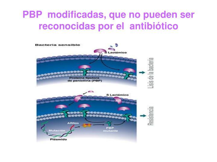 PBP  modificadas, que no pueden ser reconocidas por el  antibiótico