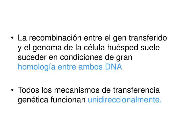 La recombinación entre el gen transferido y el genoma de la célula huésped suele suceder en condiciones de gran