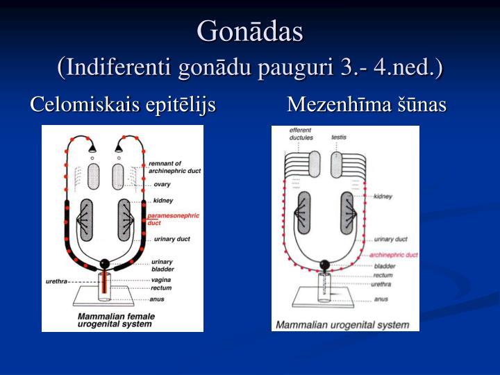 Gonādas