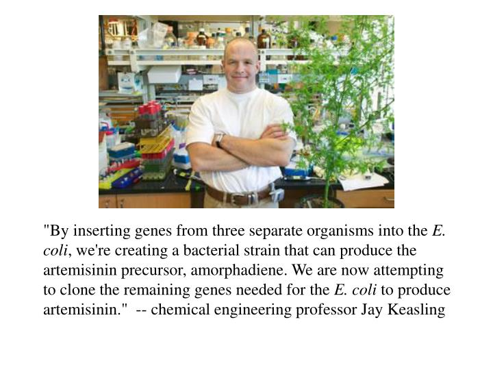 """By inserting genes from three separate organisms into the"