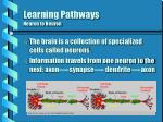 learning pathways neuron to neuron
