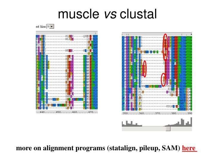 Muscle vs clustal