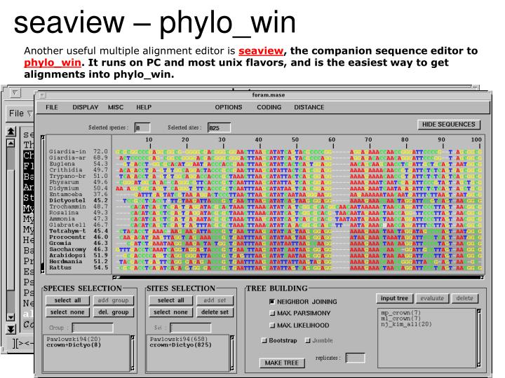 seaview – phylo_win