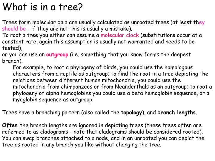 What is in a tree?