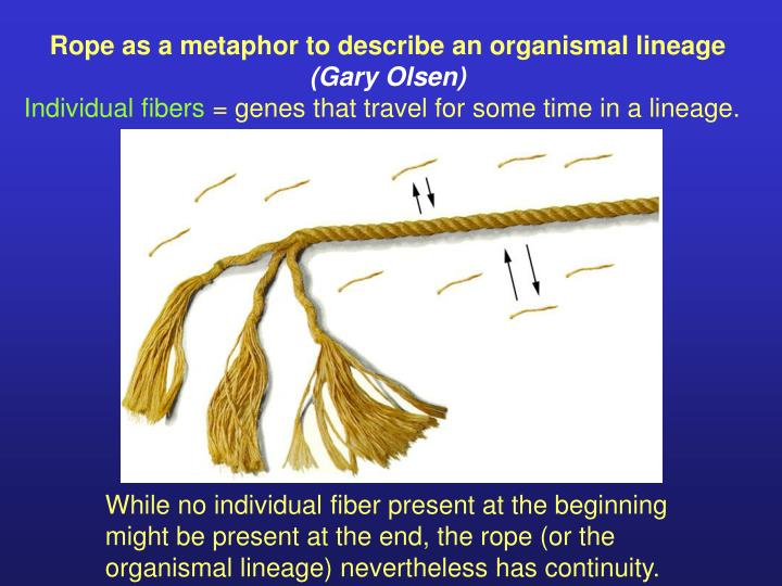 Rope as a metaphor to describe an organismal lineage