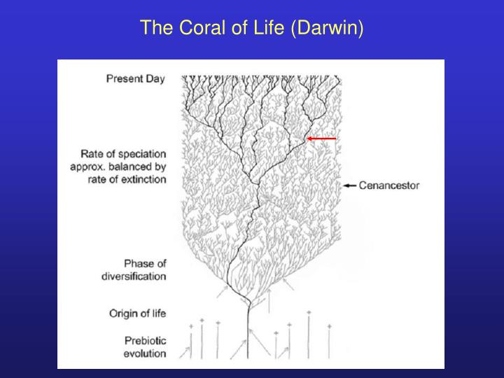The Coral of Life (Darwin)